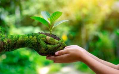 Environmental Translation Services for The Green Economy
